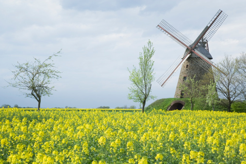 Restoring「Windmill and canola field countryside (XXL)」:スマホ壁紙(16)