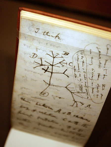 Note Pad「Darwin Exhibit Opens In New York City」:写真・画像(2)[壁紙.com]