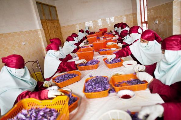 Saffron「Saffron Harvested in Herat」:写真・画像(10)[壁紙.com]
