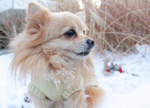 Snowdrift「Dog playing in snow」:スマホ壁紙(16)