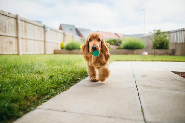 Dog Playing Fetch:スマホ壁紙(壁紙.com)