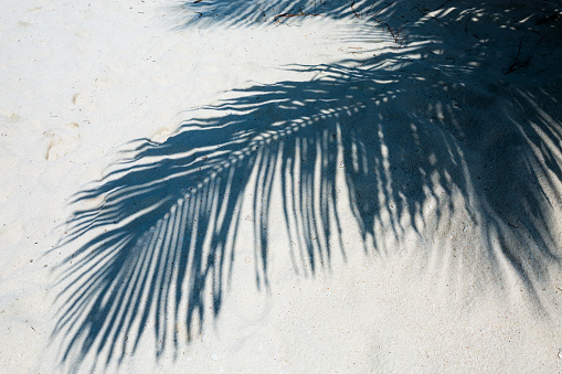 Frond「Shadow of palm tree leaf in the sand, Caribbean」:スマホ壁紙(15)
