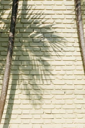 Palm tree「Shadow of palm tree on brick wall」:スマホ壁紙(5)