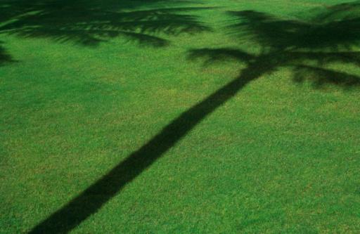 Single Tree「Shadow of palm tree on grass」:スマホ壁紙(13)