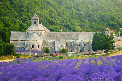 Abbey - Monastery「Senanque Abbey (Provence, France)」:スマホ壁紙(13)