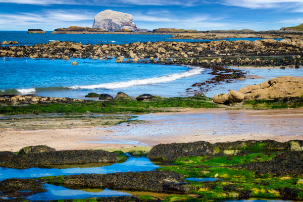 Stunning view on stone with seaweed and Bass Rock, Colony of gannets, North Berwick, Scotland, UK:スマホ壁紙(壁紙.com)