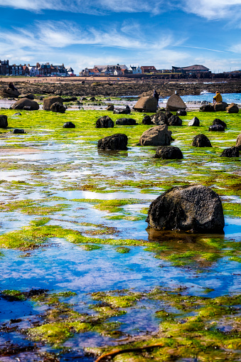 East Lothian「Stunning view on stone with seaweed and North Berwick, Scotland, UK」:スマホ壁紙(18)
