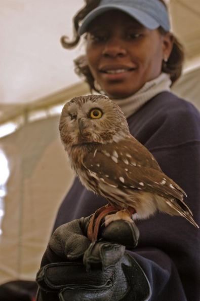 Animals Hunting「Maryland Celebrates The Return Of The Bald Eagle」:写真・画像(5)[壁紙.com]