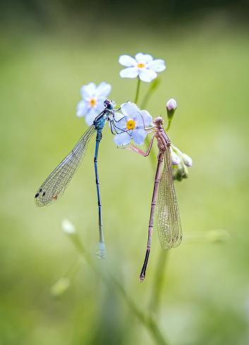 とんぼ「Dragonflies on flower petals」:スマホ壁紙(11)