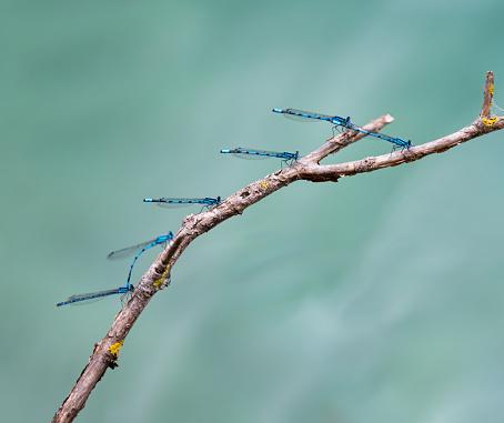とんぼ「トンボの交尾に、分岐プリトヴィツェ湖を休んで」:スマホ壁紙(14)