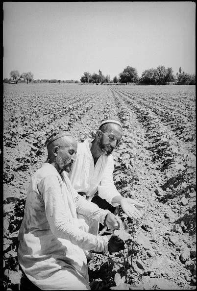 Max Penson「Two Field-Crop Growers」:写真・画像(3)[壁紙.com]