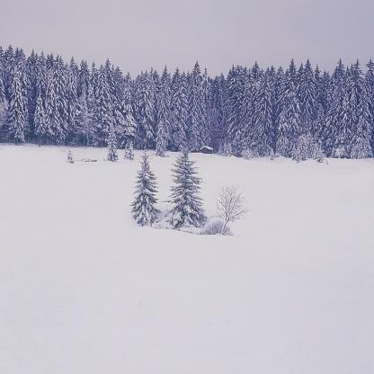 Bayerischer Wald National Park「White Landscapes」:スマホ壁紙(3)