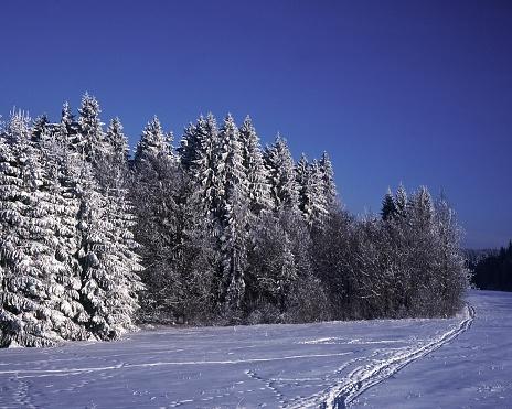 クロスカントリースキー「White Landscapes」:スマホ壁紙(12)