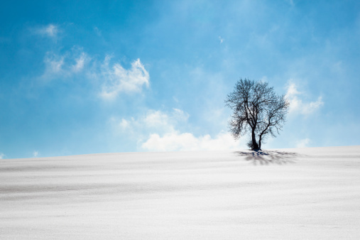 Depression - Land Feature「outstanding winter tree」:スマホ壁紙(1)