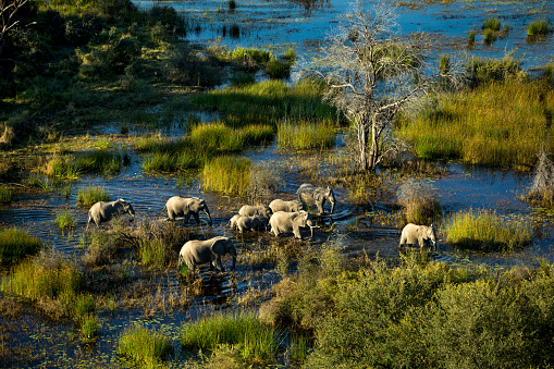 Okavango Delta「A horde of elephants in a sunny day.」:スマホ壁紙(5)