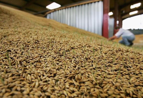 Barley「Price increase of farm produce due to flood damage」:写真・画像(4)[壁紙.com]