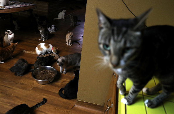 猫「'Cat Lady' Turns California Home Into No-Cage Cat Sanctuary」:写真・画像(9)[壁紙.com]