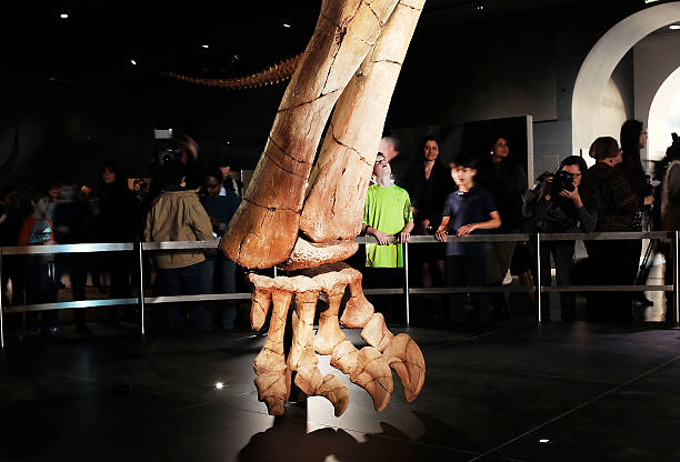 Museum Of Natural History Holds Media Preview Of New 122-Foot Dinosaur Exhibit:ニュース(壁紙.com)