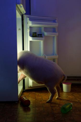 Accessibility「Animal thief - pig in refrigerator」:スマホ壁紙(6)