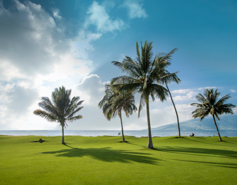 Kihei「Perfect Lawn, Palm Trees, Seashore」:スマホ壁紙(3)