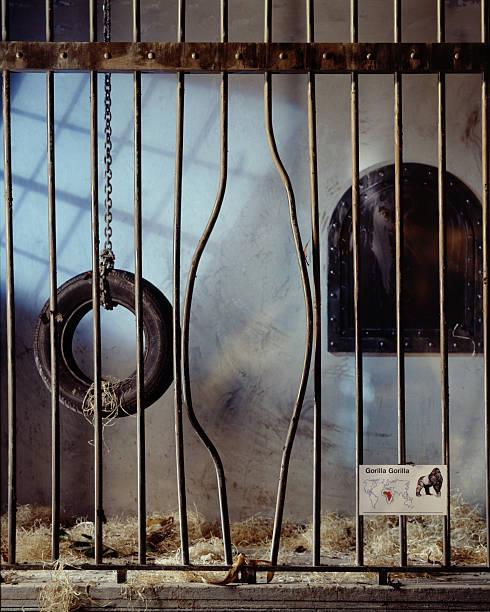 Gorilla Cage with Bent Bars:スマホ壁紙(壁紙.com)