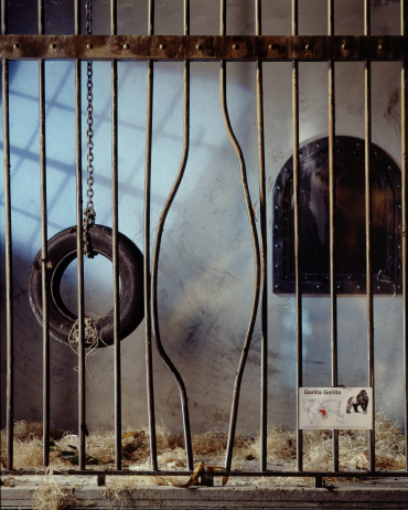 Animal Wildlife「Gorilla Cage with Bent Bars」:スマホ壁紙(12)