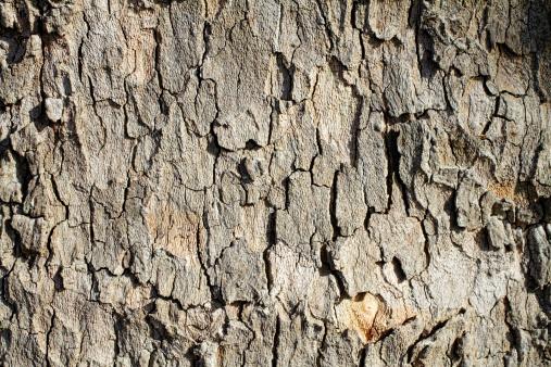 セイヨウカジカエデ「やわらかなトーンの曲線平面ツリーの樹皮のロンドン」:スマホ壁紙(14)