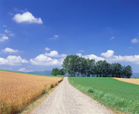 Biei Town「Wheat and soybean field, Hokkaido, Japan」:スマホ壁紙(12)