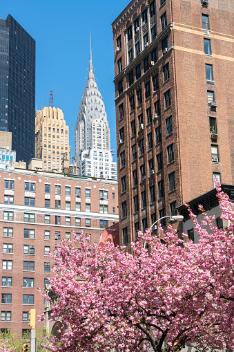 Vertical「Chrysler Building and other Midtown Manhattan buildings can be seen rows of Cherry blossoms trees at Park Avenue in Manhattan New York City.」:スマホ壁紙(12)