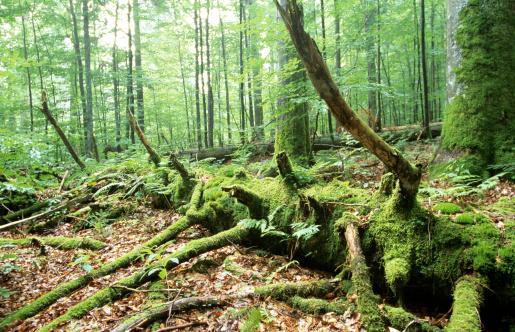 Log「Germany, Bavarian forest, National park」:スマホ壁紙(7)
