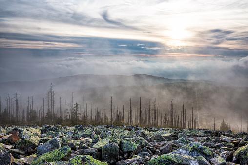 Bavarian Forest「Germany, Bavaria, Lusen, Bavarian Forest National Park, Forest dieback and fog in autumn」:スマホ壁紙(14)