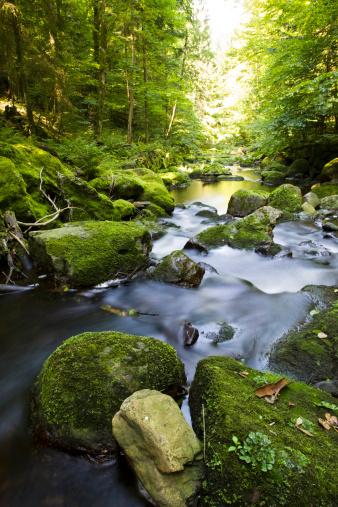Bavarian Forest「Germany, Bavarian Forest, Brook Buchberger Leite」:スマホ壁紙(13)