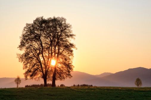 Bavarian Prealps「Germany, Bavaria, View of broad leaved tree at sunrise」:スマホ壁紙(8)