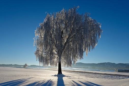 深い雪「Germany, Bavaria, Pfaffenwinkel, frost at a tree near Steingaden」:スマホ壁紙(18)