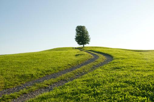 澄んだ空「Germany, Bavaria, Allgau, Single tree next to farm track」:スマホ壁紙(18)