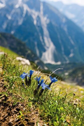 Gentian「Germany, Bavaria, Karwendelspitze in Karwendel mountains」:スマホ壁紙(12)
