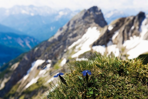 Gentian「Germany, Bavaria, Karwendelspitze, View of Karwendel mountains」:スマホ壁紙(7)