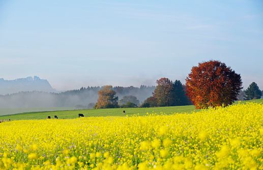 紅葉「Germany, Bavaria, Upper Bavaria, autumnal andscape near Icking」:スマホ壁紙(13)