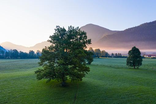 Jachenau「Germany, Bavaria, Upper Bavaria, Isarwinkel, Jachenau, oak at sunrise」:スマホ壁紙(14)