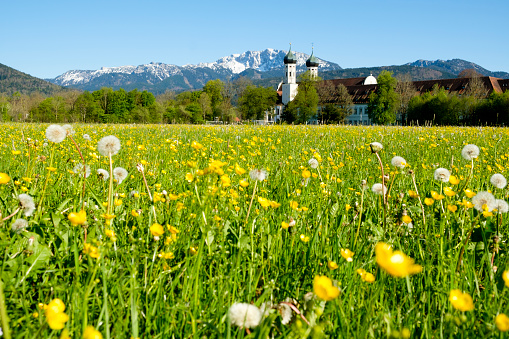 たんぽぽ「Germany, Bavaria, Upper Bavaria, Benediktbeuern, view to Benediktbeuern Monastery, Benediktenwand in the background」:スマホ壁紙(5)