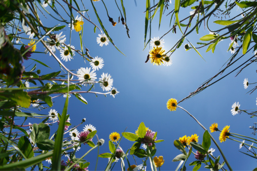 花畑「Germany, Bavaria, Upper Bavaria, Irschenberg, Upward view of flower meadow, close up」:スマホ壁紙(9)