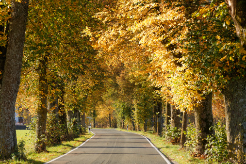 Empty Road「Germany, Bavaria, Upper Bavaria, Bad Toelz, tree-lined road in autumn」:スマホ壁紙(5)