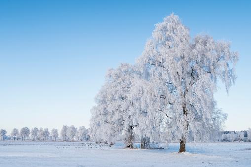 Frost「Germany, Bavaria, Upper Bavaria, Markt Schwaben,」:スマホ壁紙(6)