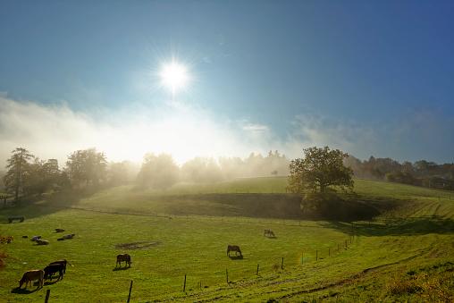 Rolling Landscape「Germany, Bavaria, Upper Bavaria, Icking, pasture at morning mist」:スマホ壁紙(9)