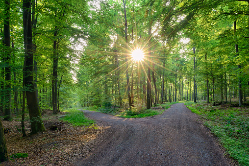 Dirt Road「Germany, Bavaria, Franconia, Spessart, Track in forest, sun with sunbeams」:スマホ壁紙(2)