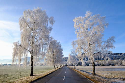 Avenue「Germany, Bavaria, Sindelsdorf, birch trees covered with hoarfrost at country road」:スマホ壁紙(19)