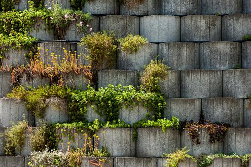 Rock Garden「Germany, Bavaria, Otterfing, Plants in concrete stone garden」:スマホ壁紙(16)