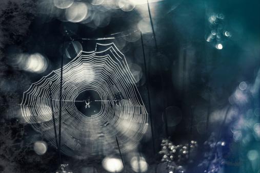 Spider Web「Germany, Bavaria, View of morning dew on spider web」:スマホ壁紙(13)