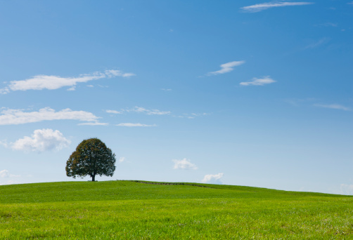 Single Tree「Germany, Bavaria, View of tree on landscape」:スマホ壁紙(19)
