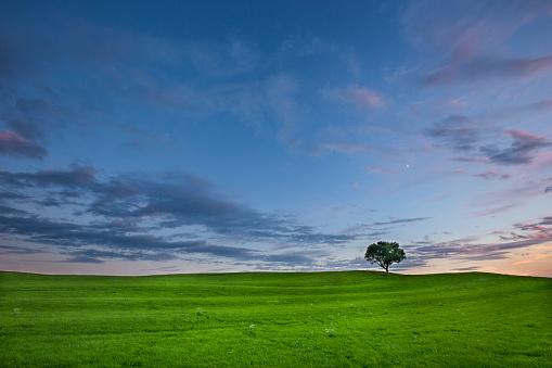 Twilight「Germany, Bavaria, green meadow and single tree」:スマホ壁紙(2)